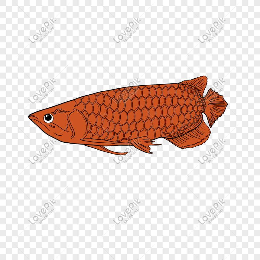 Cartoon illustration of animal. Lettering word Dumbass text meaning- Idiot.  Isolated on white background. #Ad , #sponsor… | Cartoon illustration,  Lettering, Cartoon