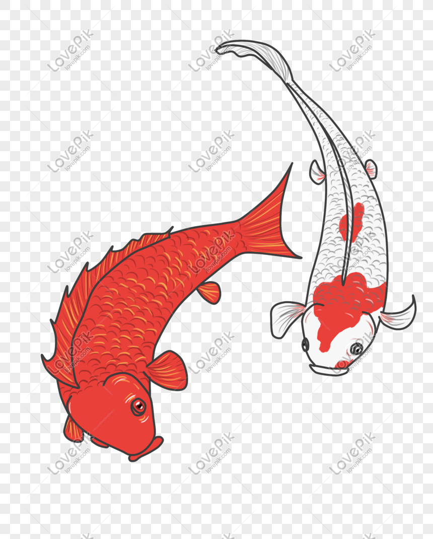 Download 970 Koleksi Gambar Ikan Koi Kartun HD Terbaik