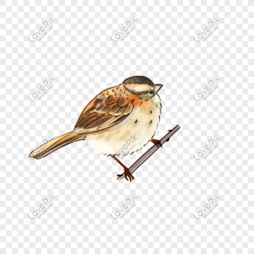 Vẽ Tay Màu Nước Cuốn Sách ảnh Phim Hoạt Hình Chim Sẻ Nhỏ