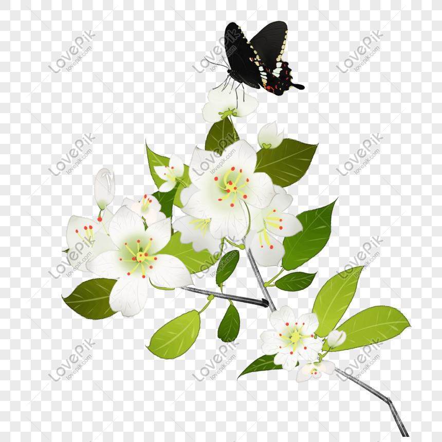 Bunga Cina Bunga Putih Pir Bunga Hiasan Kupu Kupu Hitam Png Muat Gambar Unduh Gratis Imej 611446878 Format Psd My Lovepik Com