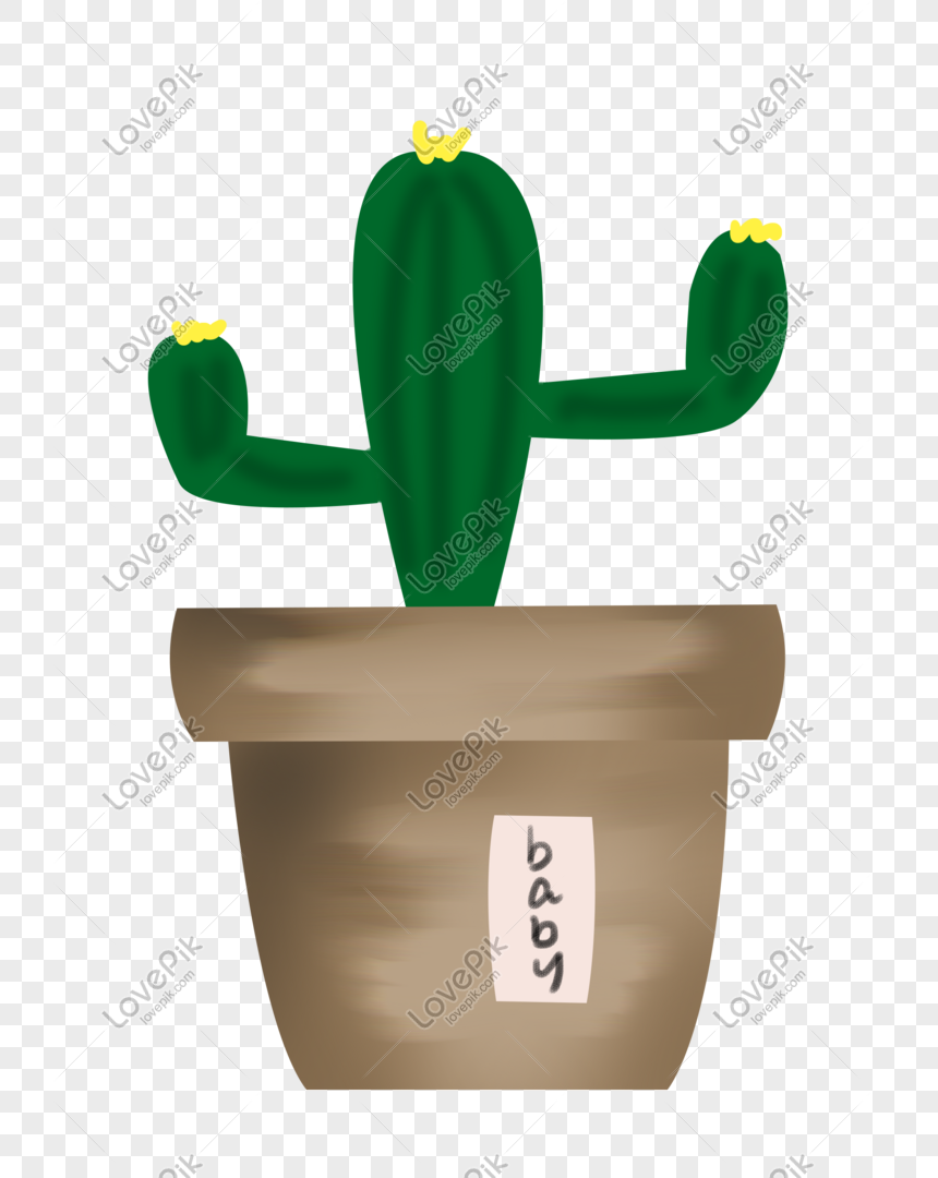 cactus plant potted illustration png