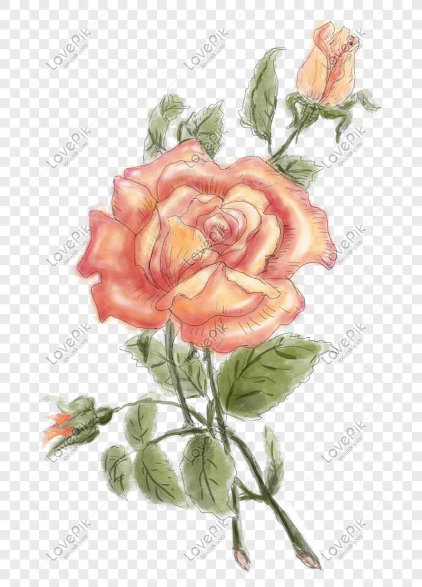 Photo De Dessin à La Main Dessiné Aquarelle Png Fleur Rose