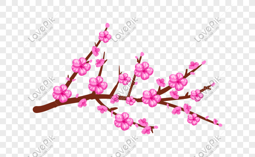 hand drawn bright peach illustration png