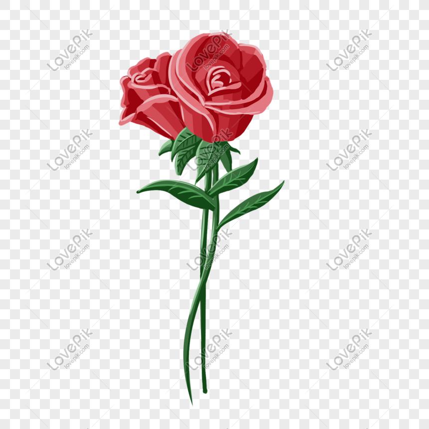Download 52 Gambar Bunga Mawar Merah Keren HD Terbaru