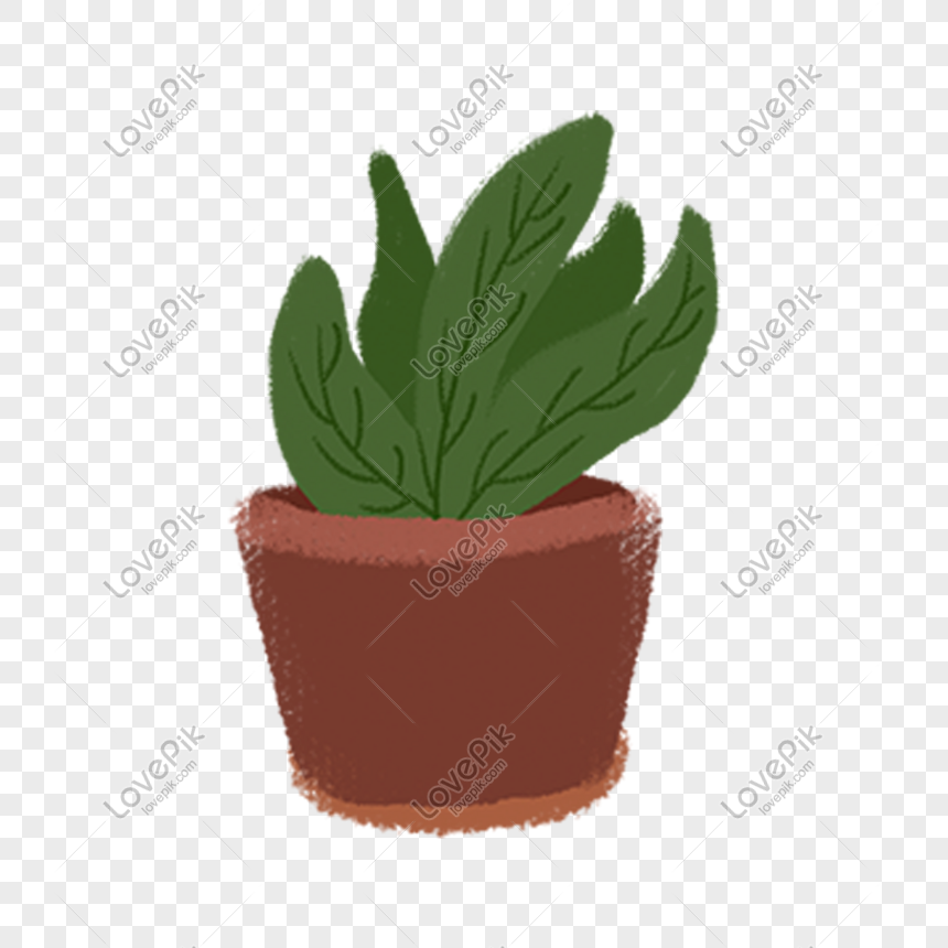 A Pot Of Beautiful Potted Plants Png
