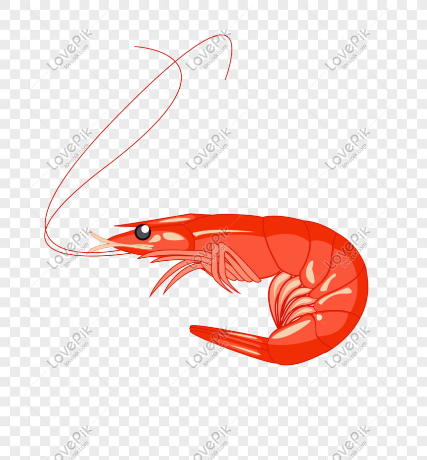 Hand Drawn Cartoon Red Shrimp Illustration Png Image_picture Free