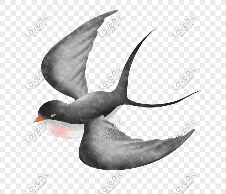 hand painted swallows png