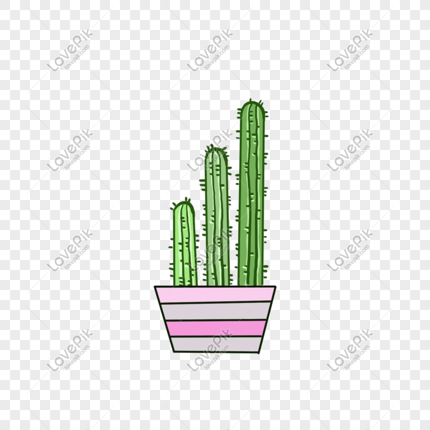 simple and cute cactus potted plant png