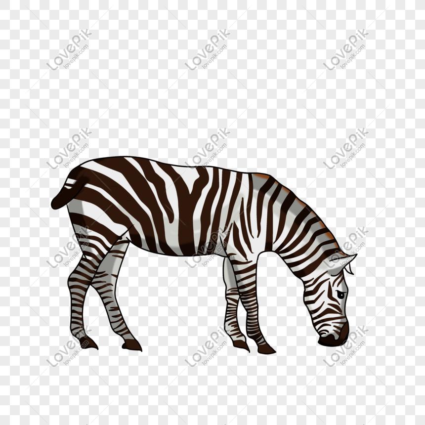 Tangan Bergambar Ilustrasi Haiwan Kartun Zebra Sumber Fail Psd