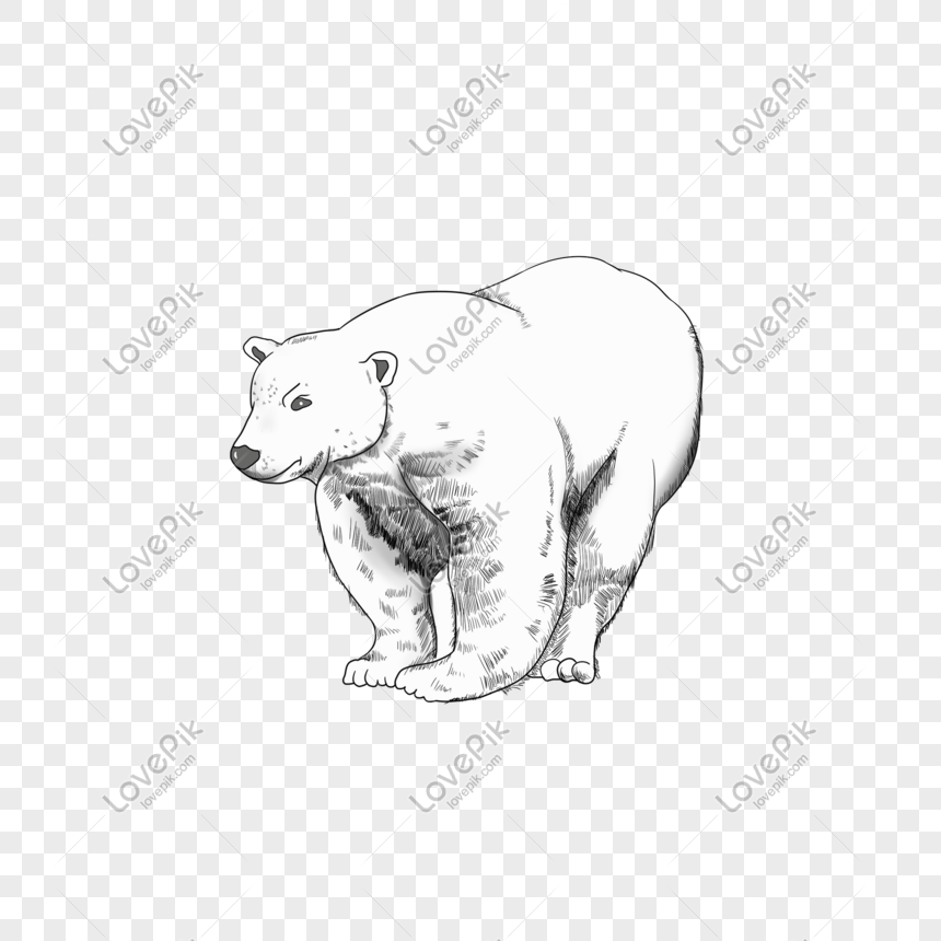 Hand Drawn Illustration Cartoon Animal Polar Bear White Psd