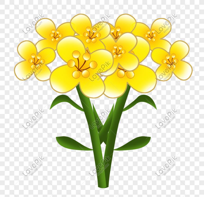 Gambar Ilustrasi Tanaman Bunga Ilustrasi Tanaman Bunga Canola Kuning Png Grafik Gambar Unduh