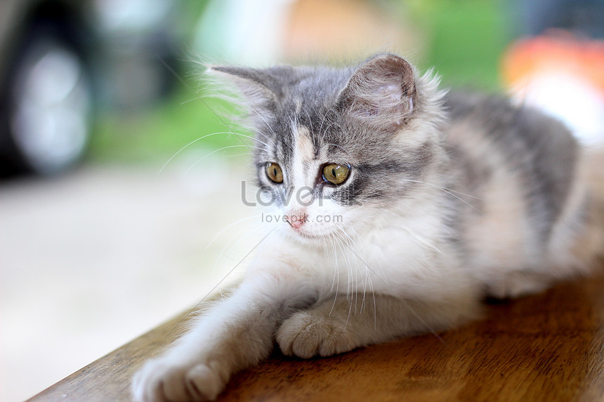 Unduh 68+ Gambar Kucing Rumah Keren Gratis
