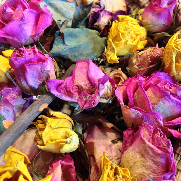 Dried rose petals photo image_picture free download