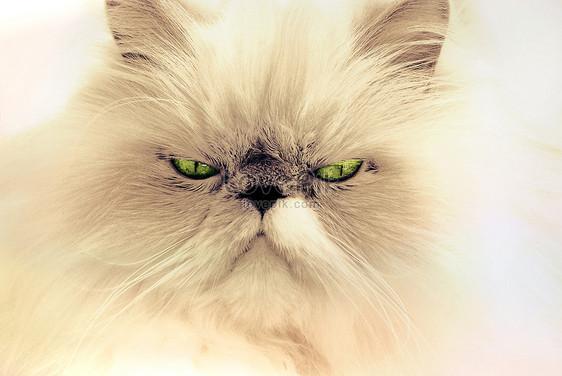 Gambar Kucing Garfield godean.web.id