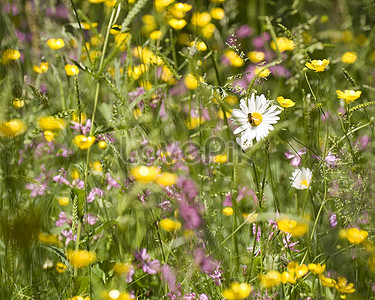 White flowers in the flower bushes photo imagepicture free download small white flowers in the flower bushes mightylinksfo