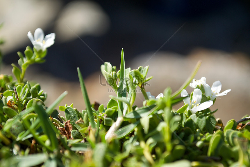 Small white flowers in the grass photo imagepicture free download small white flowers in the grass mightylinksfo