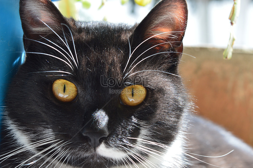 Gambar Kucing Hitam Meme godean.web.id