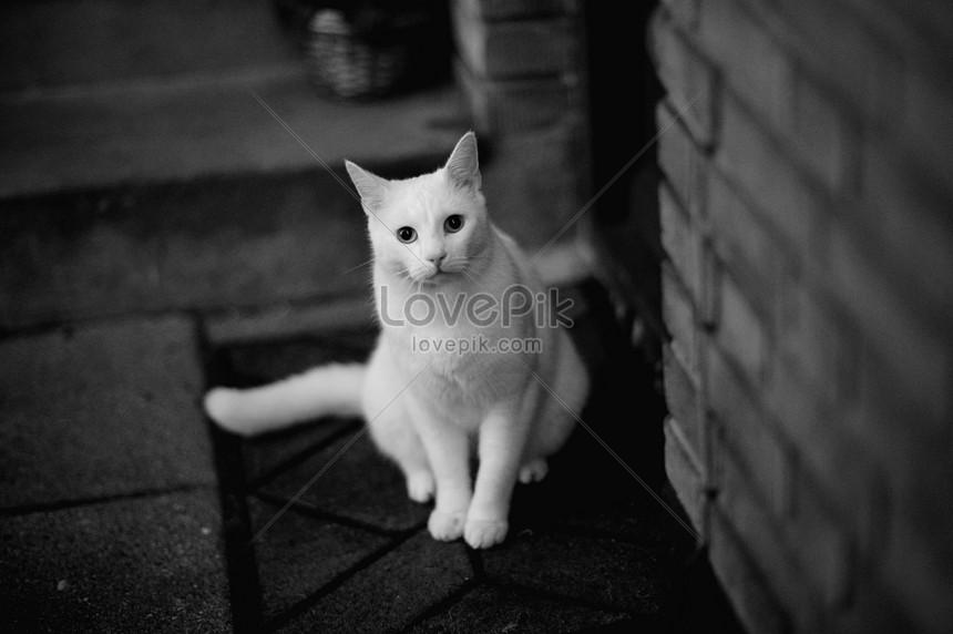 Download 89+  Gambar Kucing Persia Warna Kuning Terlihat Keren HD