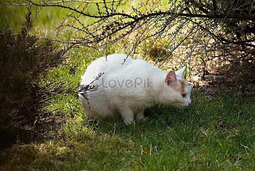 78  Gambar Kucing Warna Putih Kekinian