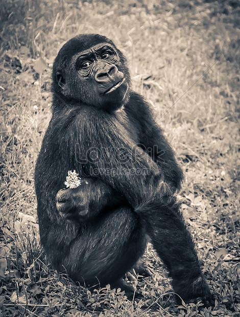 Unduh 95+ Gambar Monyet Jongkok Paling Baru Gratis