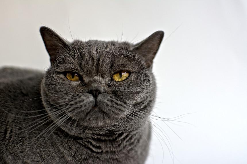 Gambar Kucing Hitam godean.web.id
