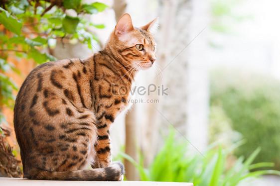 Download 63+  Gambar Kucing Sedang Duduk Paling Baru