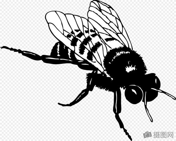 Sketsa Lebah Hitam Dan Putih Gambar Unduh Gratis Grafik