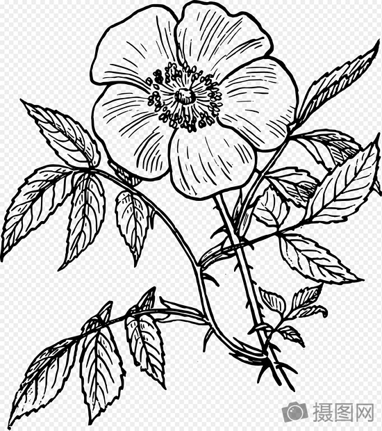 Sketsa Tanaman Bunga Liar Gambar Unduh Gratis Grafik