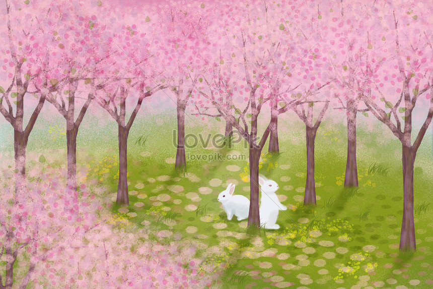 chasing cherry blossoms in spring rabbits