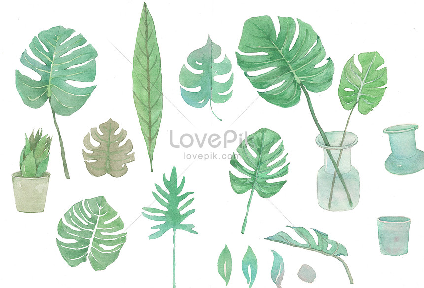 material de fundo de folha de planta