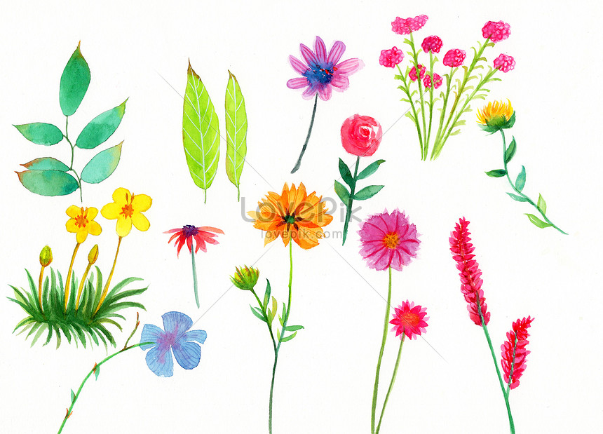 watercolor hand painted plants