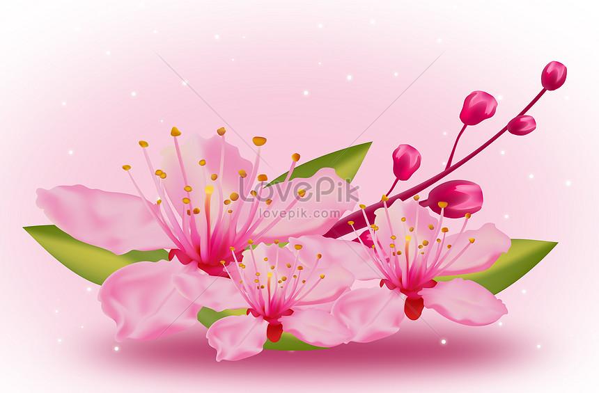 blossom cherry blossoms