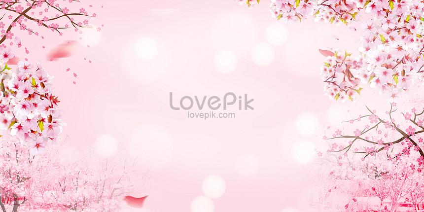 aesthetical cherry blossom background