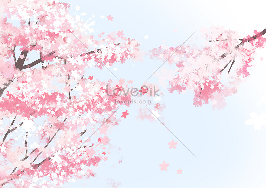 Spring Cherry Blossoms Illustration Image Picture Free Download