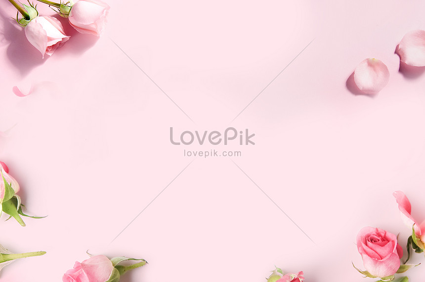 white background of pink flowers