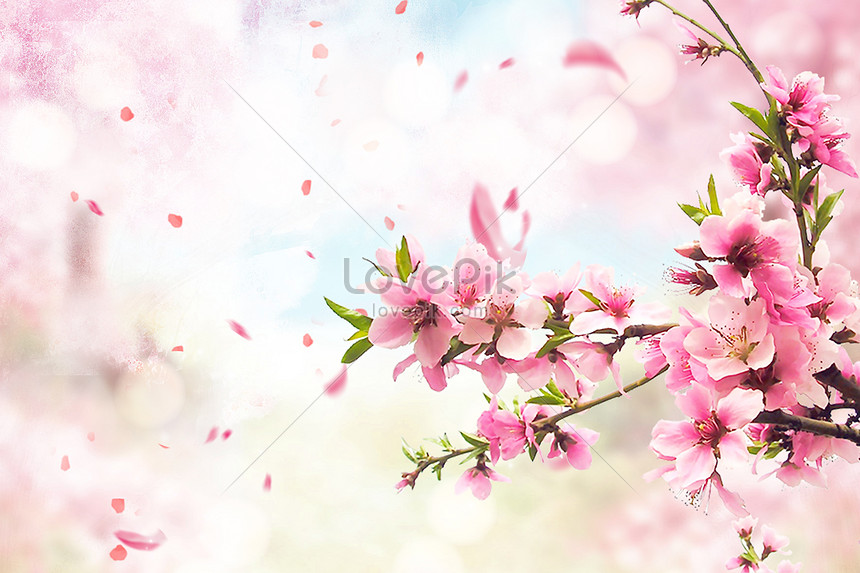 fresh cherry blossom background