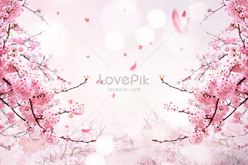 cherry blossom aesthetic background