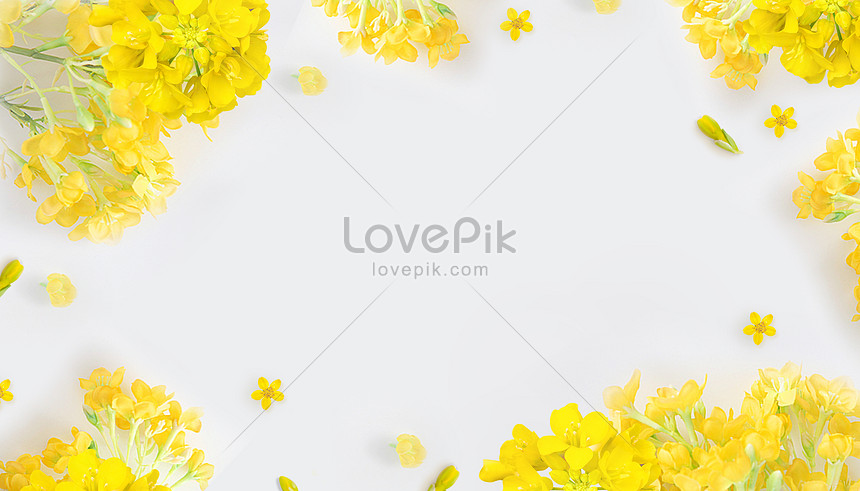Wallpaper Bunga Sederhana Gambar Unduh Gratis Kreatif