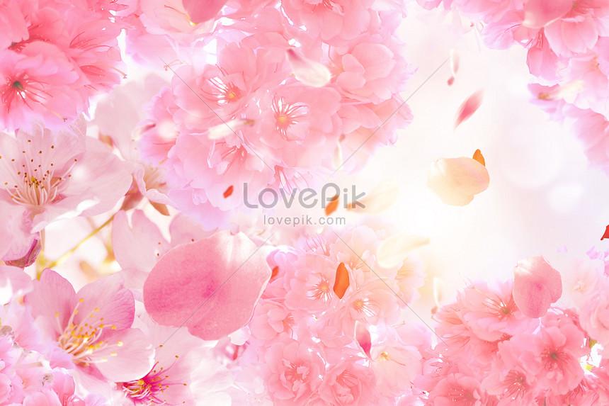 aesthetic cherry blossom background
