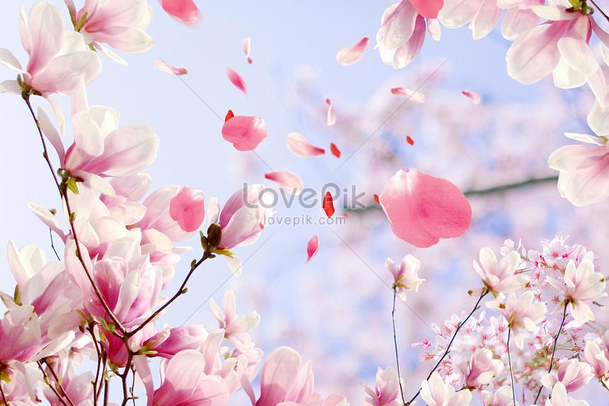 Unduh 920 Koleksi Gambar Bunga Jatuh HD Paling Keren