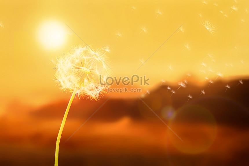 dandelion under the sun
