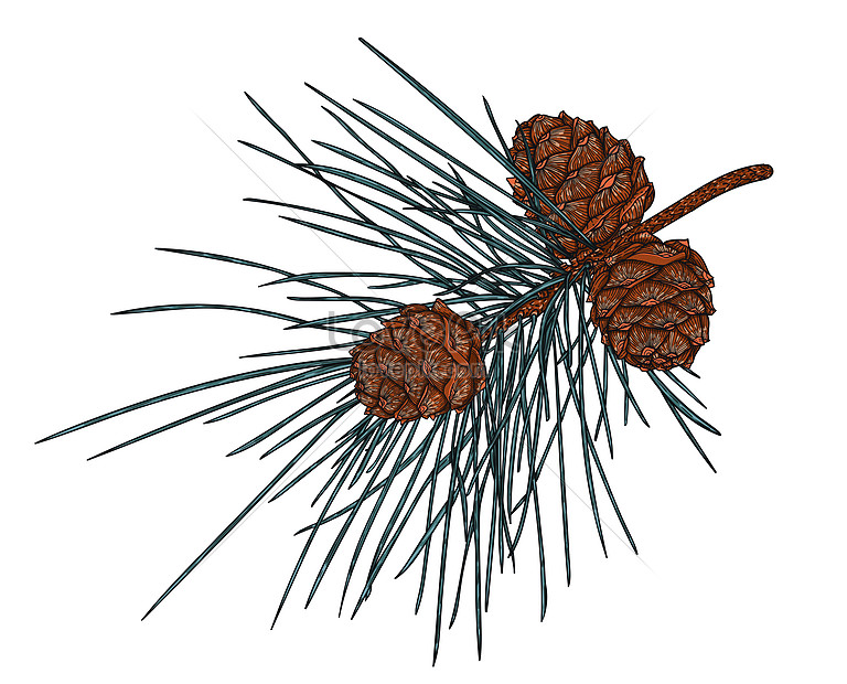 fir branch with cones of christmas decoration