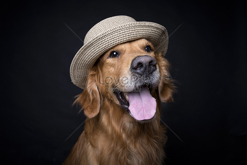 golden retriever dog with a straw hat