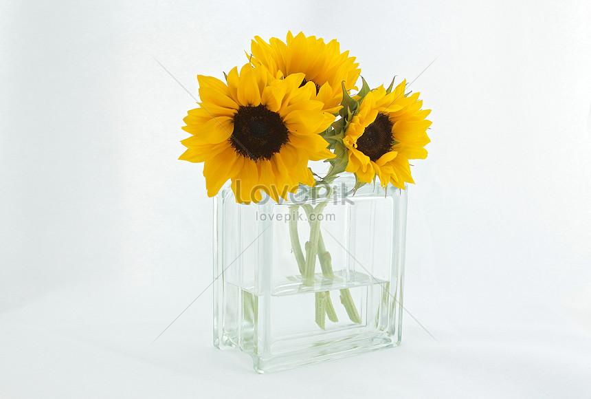 Sunflower Vase Photo Imagepicture Free Download 500008948lovepik