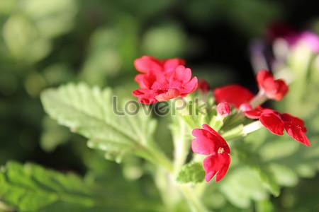 Very pretty and charming flowers photo imagepicture free download very pretty and charming flowers mightylinksfo