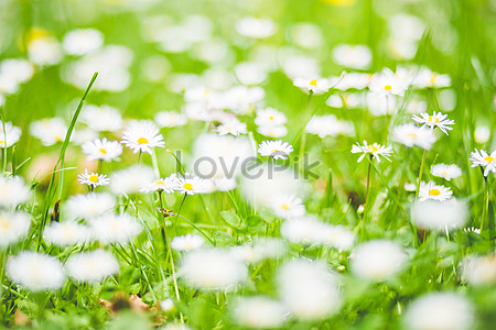 White flowers on the grass photo imagepicture free download small white flowers in the grass mightylinksfo