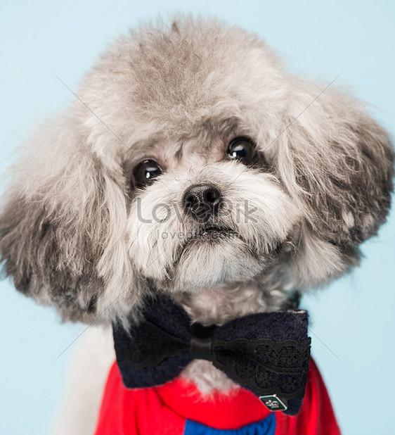 Bilder Zum Teddy Hunddownload Foto Id500077231jpg Bilder Prfde