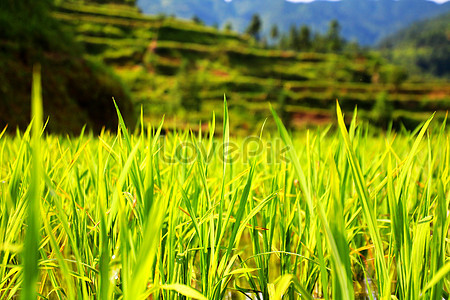 In the field of hope, atmosphere, background, end background image.