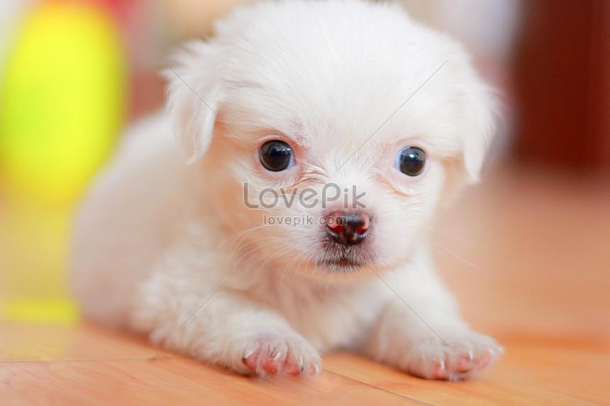Unduh 88 Gambar Lucu Anak Anjing Terlucu