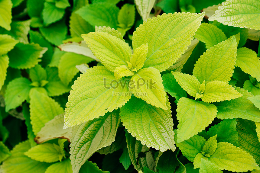 green plant leaves in spring